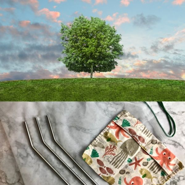 Tree with sky background with some eco-friendly kitchen tools beneath.
