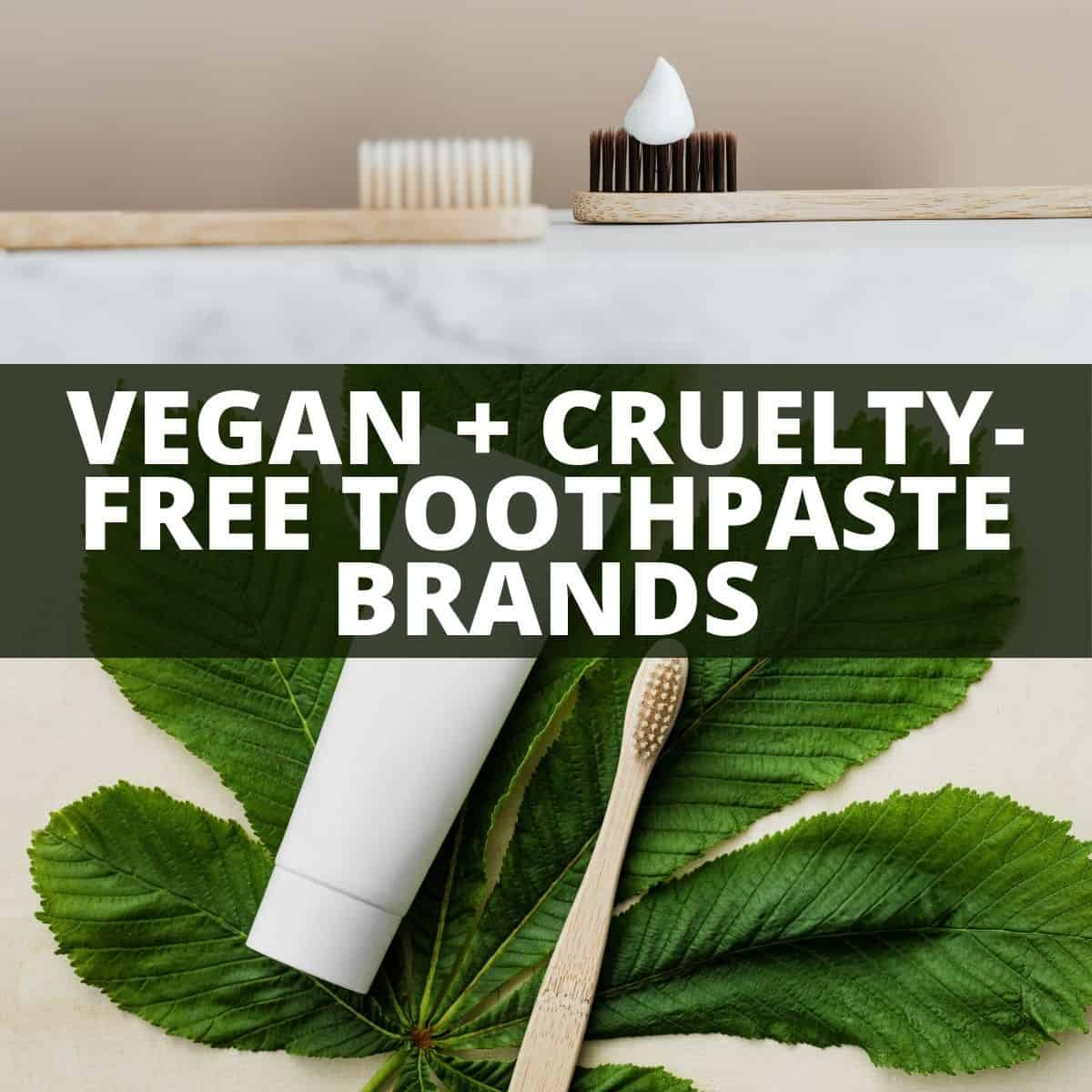 Three toothbrushes and toothpaste with text that says vegan and cruelty-free toothpaste brands.